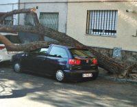 Un árbol de gran tamaño aplasta un vehículo en Manoteras