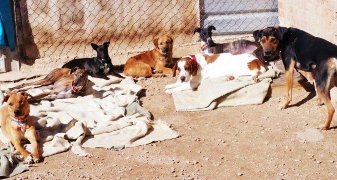 Jornada solidaria con los animales en Manoteras