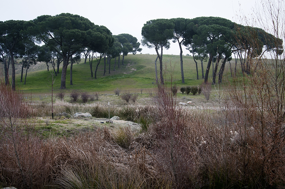 Un parque forestal dibujado como un árbol