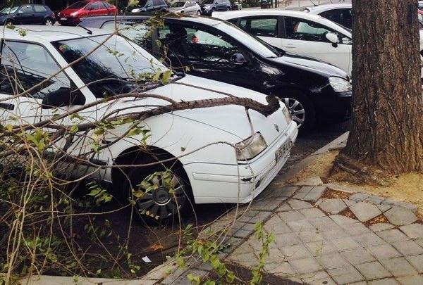 ¿Te preocupan los árboles de tu calle?