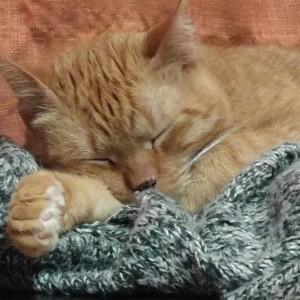 Hortaleza, pionera en la protección de gatos callejeros