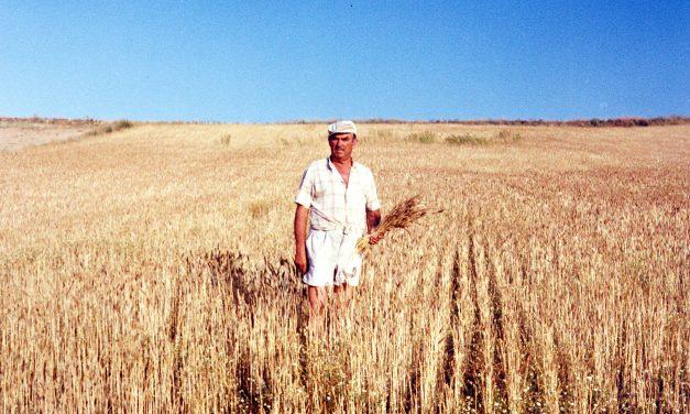 """Nemesio Aguado, """"el mayor cosechero de trigo de Hortaleza y Canillas"""""""
