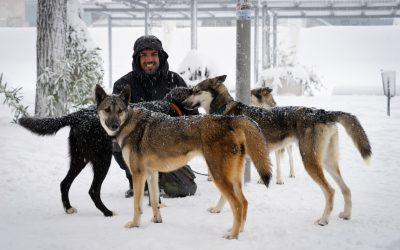 «Ser 'musher' es una forma de vida»