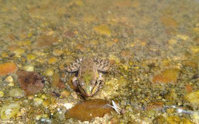 Muerte de las ranas del parque de Villa Rosa